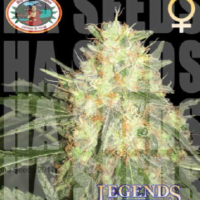Legends Gold Feminised Cannabis Seeds | Big Buddha Seeds
