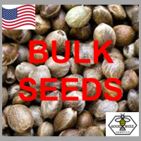 Auto Girl Scout Cookies Feminized Cannabis Seeds | 100 Bulk Seeds