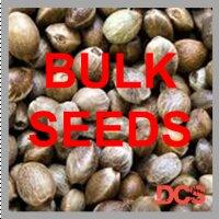 Auto Bruce Banner Feminised  | 100 Seed Bulk Pack