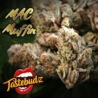 MAC Muffin Feminised - Tastebudz