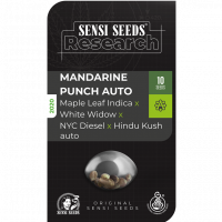 Mandarine Punch Auto Feminised Cannabis Seeds - Sensi Seeds Research