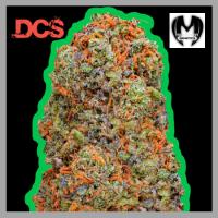 Monster Gelato Feminised Cannabis Seeds | Monster Genetics