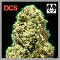 Monster Girl Scout Cookies Feminised Cannabis Seeds | Monster Genetics