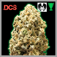 Monster Pebbles Feminised Cannabis Seeds | Monster Genetics