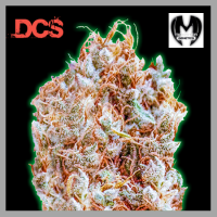 Monster Zkittles Feminised Cannabis Seeds | Monster Genetics