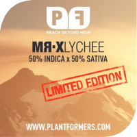 MR-X Lychee Regular Cannabis Seeds | Plantformers