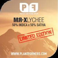 MR-X Lychee Regular Cannabis Seeds