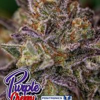 Purple Cherry Feminised Cannabis Seeds | Positronics