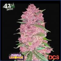 Purple Lemonade Auto Feminised Cannabis Seeds | Fast Buds