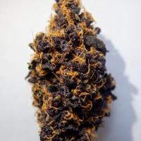 Purple Punch Auto - Tastebudz - Discount Cannabis Seeds