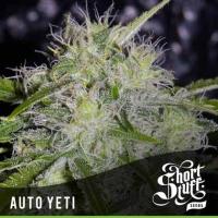 Auto Yeti Feminised Cannabis Seeds | Shortstuff Seeds