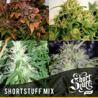 Short Stuff Mix (10 Seeds) Feminised Cannabis Seeds   Shortstuff Seeds