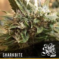 Sharkbite Feminised Cannabis Seeds   Shortstuff Seeds