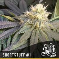 Short Stuff #1 Feminised Cannabis Seeds   Shortstuff Seeds