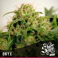 Onyx Feminised Cannabis Seeds | Shortstuff Seeds