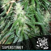 Super Stinky Super Auto Feminised Cannabis Seeds   Shortstuff Seeds