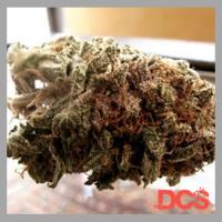 Super Iced Grapefruit Feminised Cannabis Seeds | Feminized Seeds