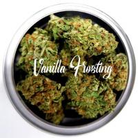 Vanilla Frosting Feminised - Tastebudz