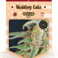 Wedding Cake Feminised Cannabis Seeds | Garden of Green