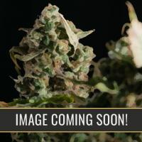 Zombie Death Fuck Feminised Cannabis Seeds | Blim Burn Seeds