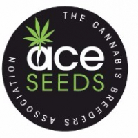 Green Haze x Malawi Regular Cannabis Seeds | Ace Seeds