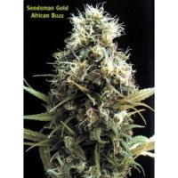 African Buzz Regular Cannabis Seeds | Seedsman