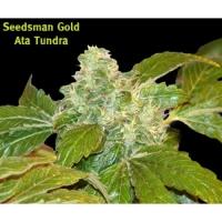 Ata Tundra Regular Cannabis Seeds | Seedsman
