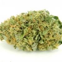 Auto Torpedo Feminised Cannabis Seeds