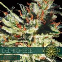 Gouda's Grass Auto Feminised Cannabis Seeds | Vision Seeds