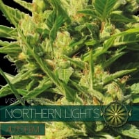 Northern Lights Auto Feminised Cannabis Seeds | Vision Seeds