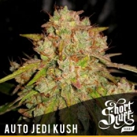 Auto Jedi Kush Feminised Cannabis Seeds | Short Stuff Seeds