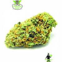 Big Green Crack Feminised Cannabis Seeds | Dispensario Seeds