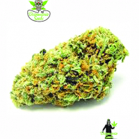 Big Green Crack Feminised Cannabis Seeds | Dispensario Seeds