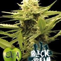 Black Dream Feminised Cannabis Seeds