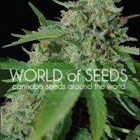 Brazil Amazonia Regular Cannabis Seeds | World of Seeds