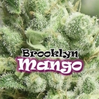 Brooklyn Mango Feminised Cannabis Seeds | Dr Underground