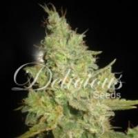 Critical Kali Mist Feminised Cannabis Seeds | Delicious Seeds