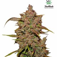 Crystal METH Auto Feminised Cannabis Seeds   Fast Buds