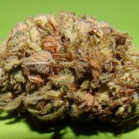 Dark Cookie Feminised Cannabis Seeds | Dr Underground