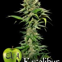 Excalibur Feminised Cannabis Seeds