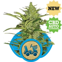 Fast Eddy CBD Auto Feminised Cannabis Seeds | Royal Queen Seeds