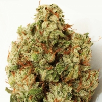 Green Ninja Feminised Cannabis Seeds | Heavyweight Seeds
