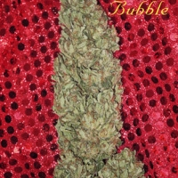 Hubble Bubble Feminised Cannabis Seeds