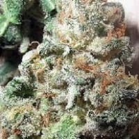 AKBC Feminised Cannabis Seeds | British Columbia