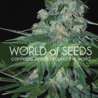Ketama Regular Cannabis Seeds | World of Seeds