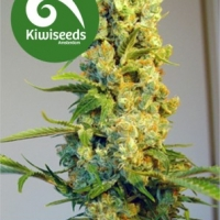 Milky Way Feminised Cannabis Seeds