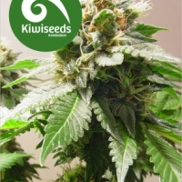 Mt Cook Feminised Cannabis Seeds