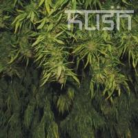 Afghani Kush Feminised Cannabis Seeds | Kush Seeds