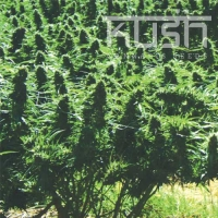 Sweet Kush Regular Cannabis Seeds | Kush Seeds