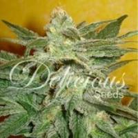 La Frutta Di Venus Auto Feminised Cannabis Seeds | Delicious Seeds